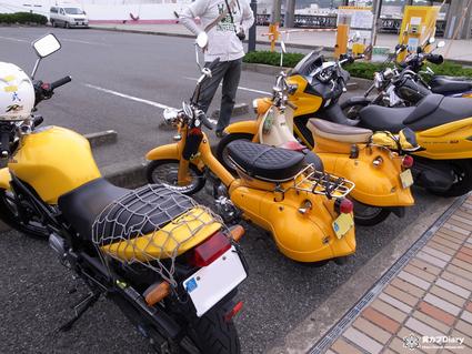 3_yellow_fes_misaki.jpg