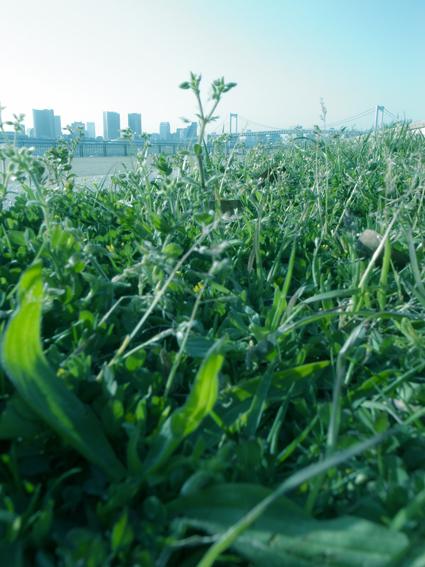 001_spring_daiba_top.jpg