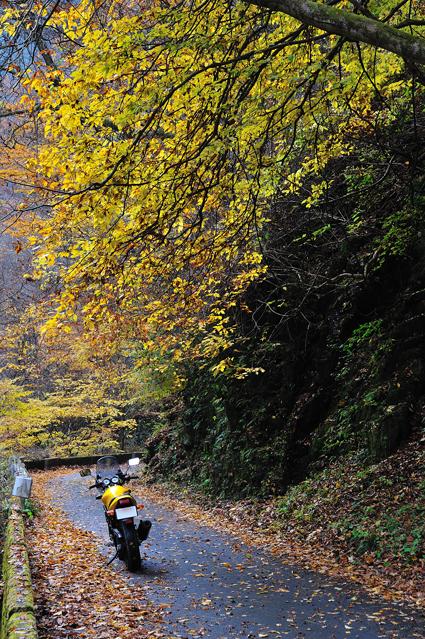 09unazawa_yellow.jpg