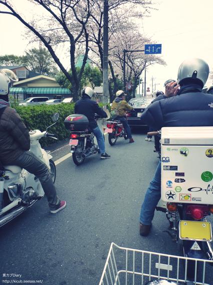 1_2011hanami.jpg