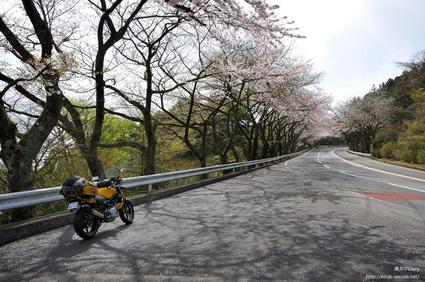 6_sakura_turn819.jpg