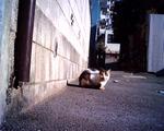 cat_machibuse.jpg