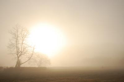 gozenyama_morning.jpg