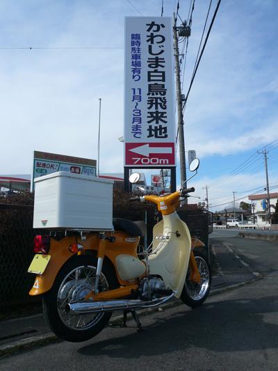 kawajima_cub.jpg