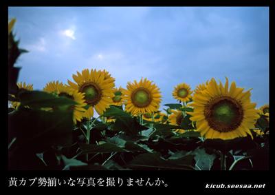 kicub_seizoroi.jpg