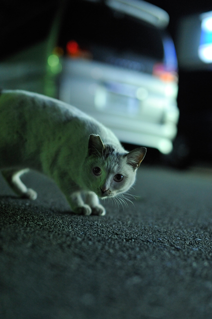 moe_kojo_cat_01.jpg