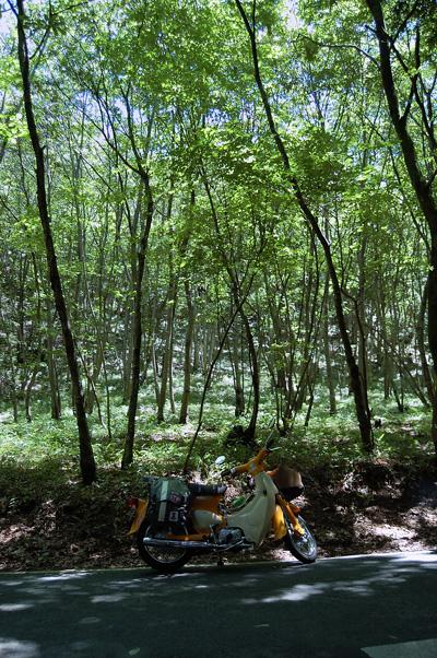 motegi_woods.jpg