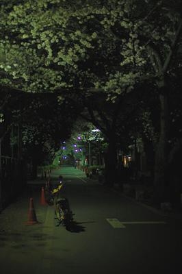 sakura_namiki_us.jpg