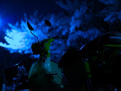 sakura_night.jpg