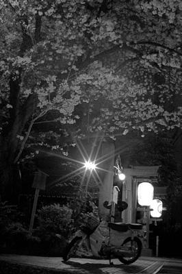 sakura_takuzou.jpg