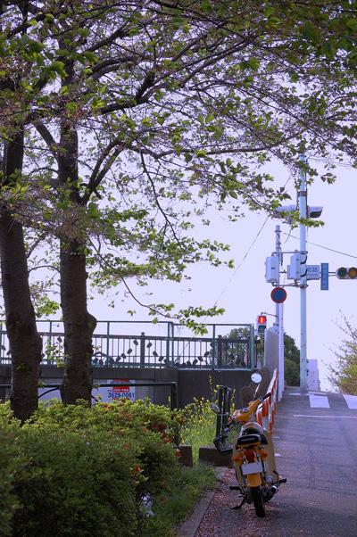 shindenbashi_temae.jpg